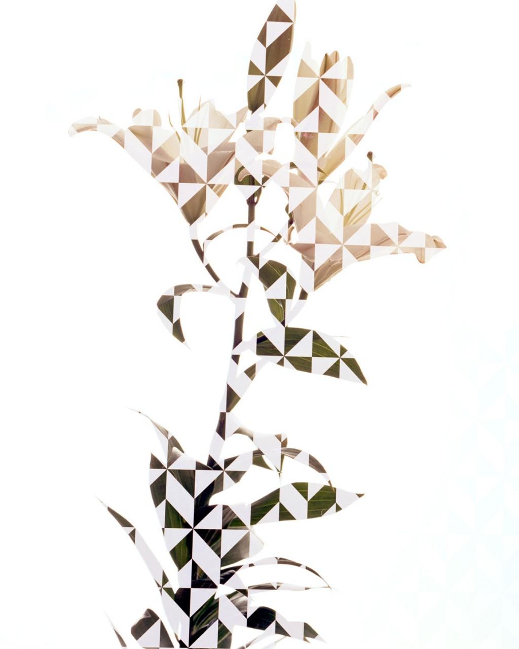 Studio Holger Kilumets Botanica